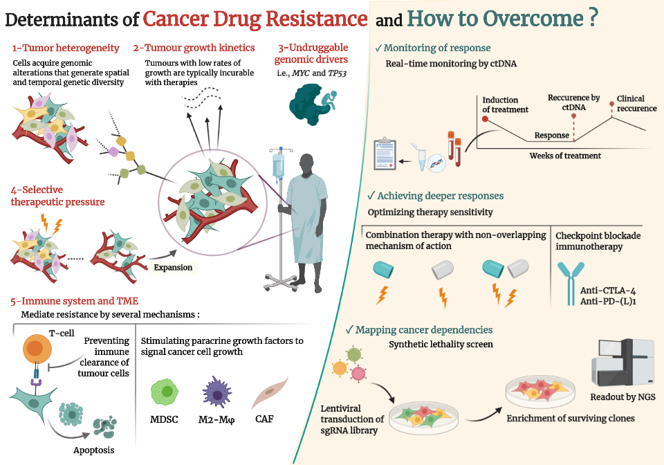 The problem of resistance to therapy in cancer is multifaceted. Vasan et al. took a reductionist approach to define key determinants of drug resistance which include tumour growth kinetics and heterogeneity; the immune system and TME; undruggable drivers; and the therapeutic pressure. Proposed solutions to drug resistance are as following: adaptive monitoring during therapy; addition of novel drugs to get deeper responses; and identification of cancer dependencies by synthetic lethality screens.